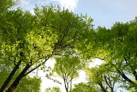 Cognitive Gridlock? Green Space Could Be The Answer